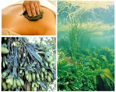 massage_algues